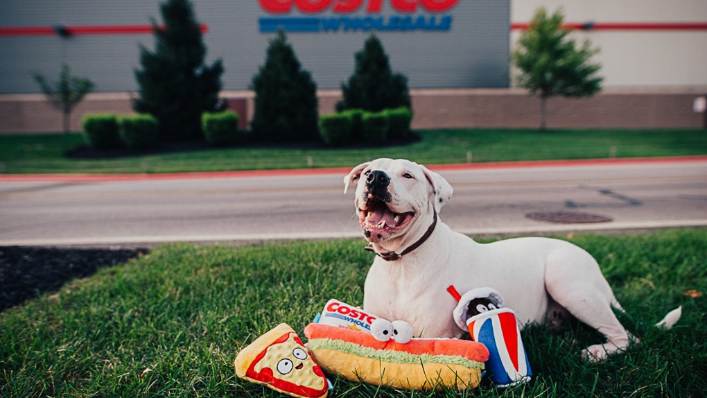 Your Pup Can Enjoy Costco Too