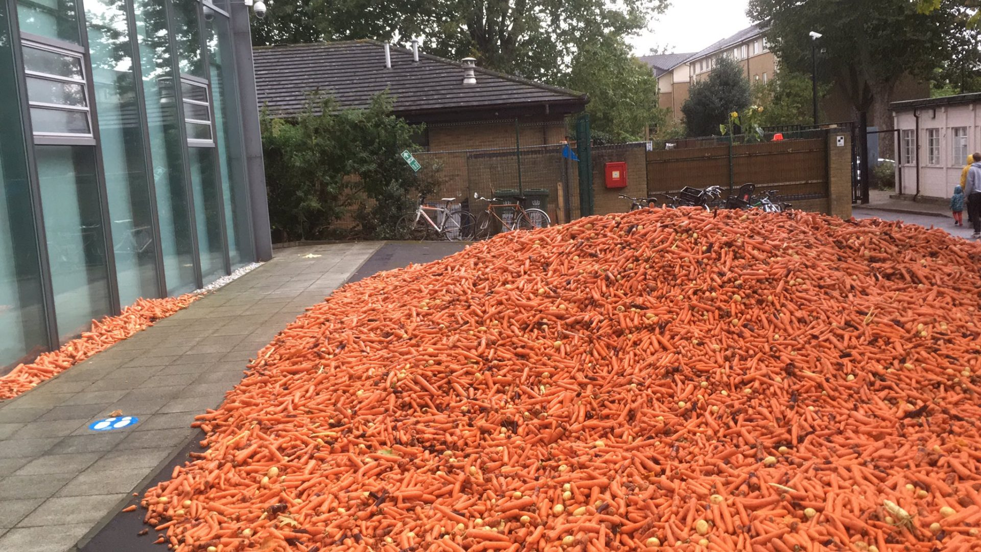 58,000 Pounds Of Carrots Dumped