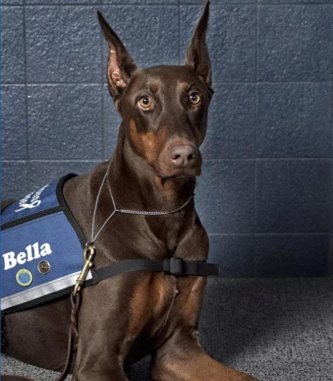 Meet Bella
