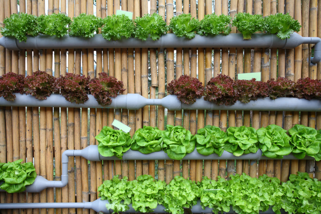 Hydroponics Can Continue To Be Called Organic