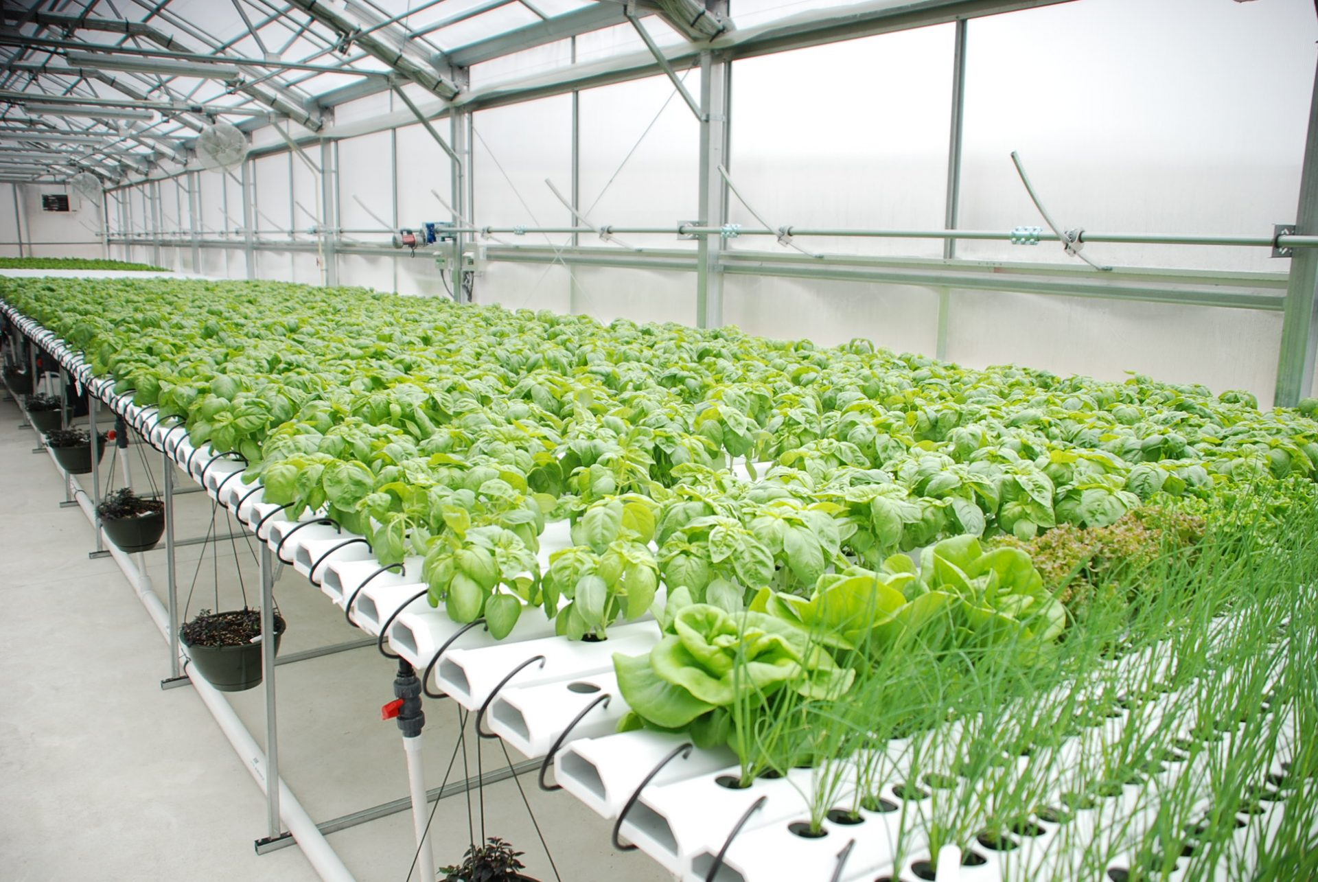 Hydroponics Being Grown